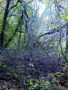 Лес около монастыря